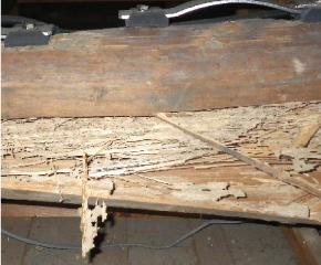 住宅 シロアリの被害チェック
